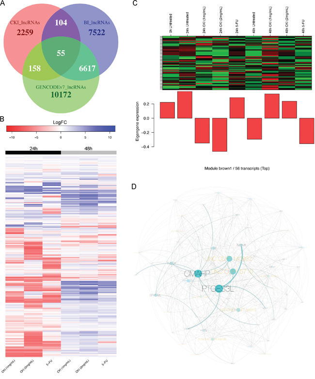 Expression change of de novo identified lncRNAs and an example of a CKI-specific co-expression module.