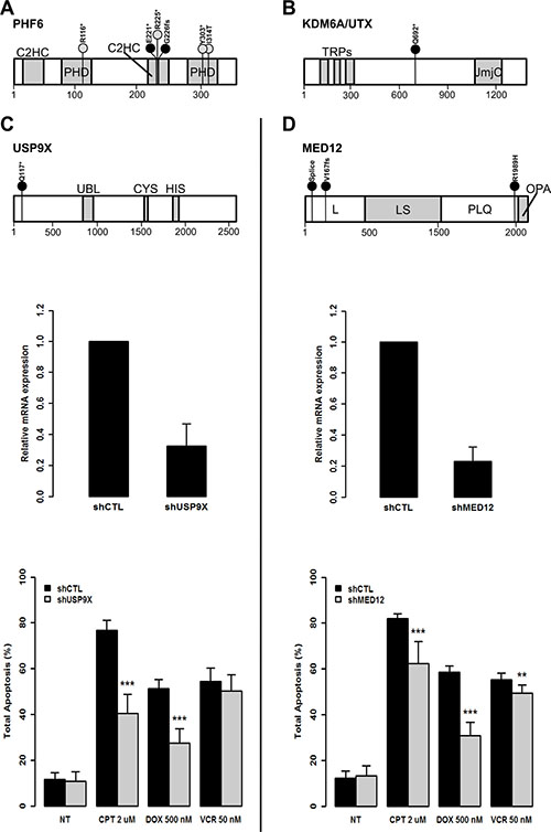 The loss of function of USP9X and MED12 protects from induced apoptosis in leukemic T-cells.