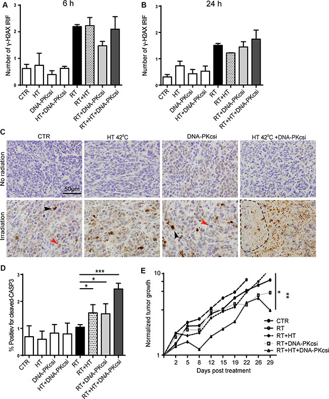 Higher levels of apoptosis and clear tumor growth delay in vivo after combination treatments.