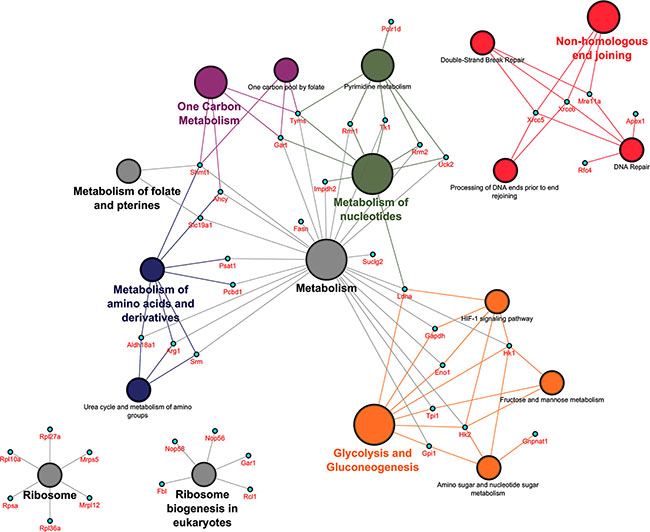Pathway mapping over protein network in PLACs of c-Myc transgenic mice.