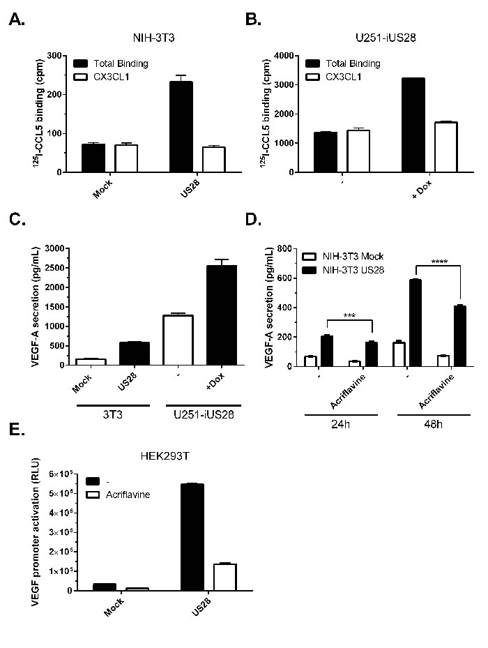 US28 constitutively induces promoter activation and secretion of VEGF via HIF-1.