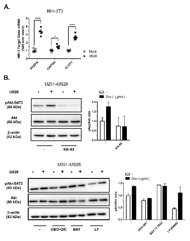 US28 promotes HIF-1 target gene transcription and reprograms activation of Akt and PKM2 which are involved in proliferation, angiogenesis and glucose metabolism through a Gα