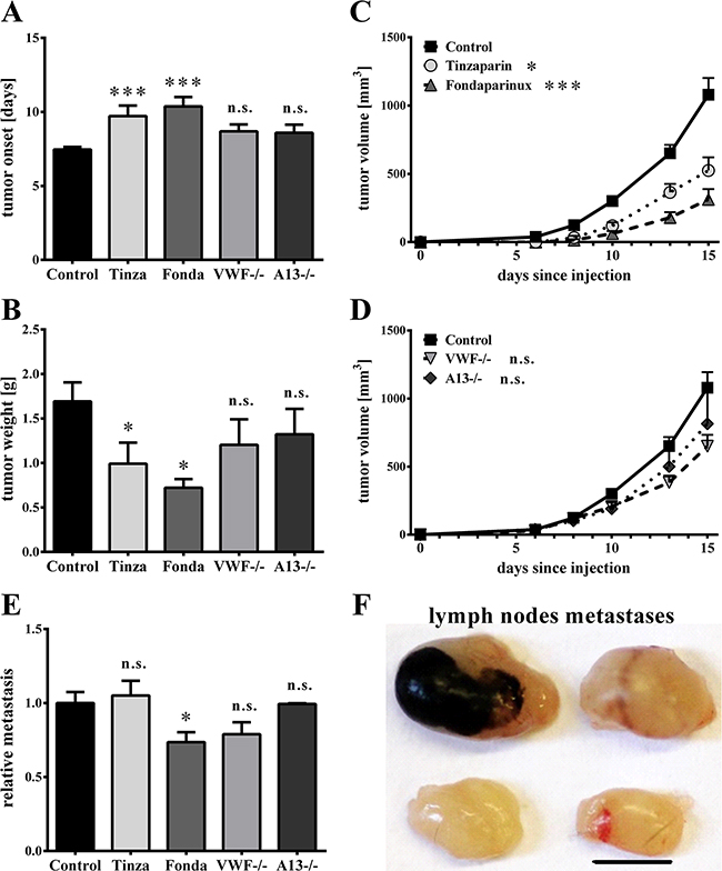 Luminal von Willebrand factor fibers have no effects on primary tumor growth or lymphatic metastasis.