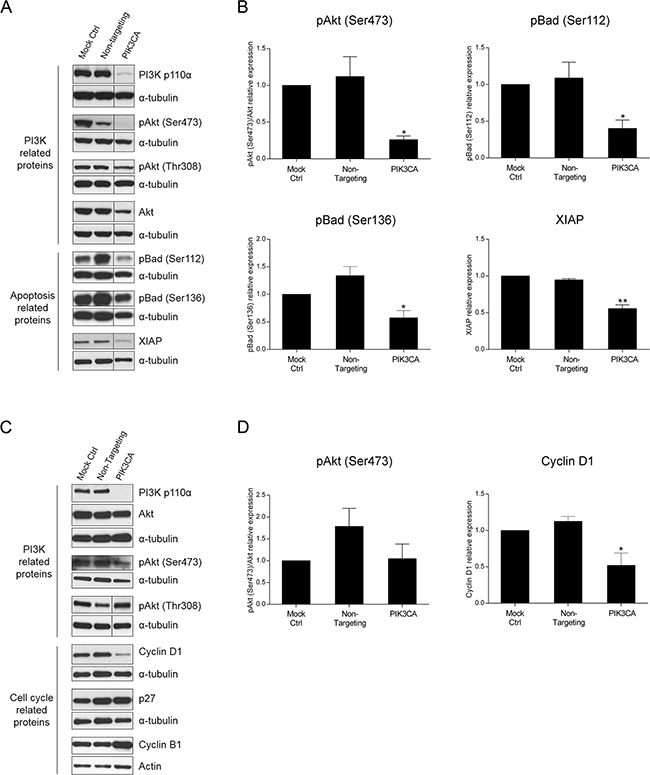 Inhibition of PI3K p110α induces downregulation of apoptotic- and cell cycle-related proteins in HCT116 and SW480 CRC cells, respectively.