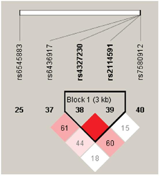 Haplotype block map for SP110 tSNPs.