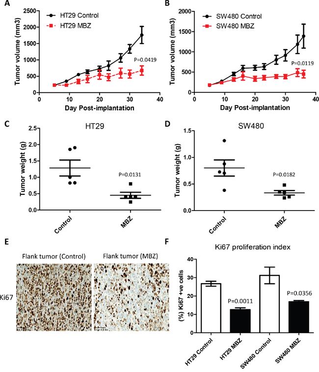 Oral Mebendazole inhibits growth and proliferation in two different colon cancer flank xenografts.