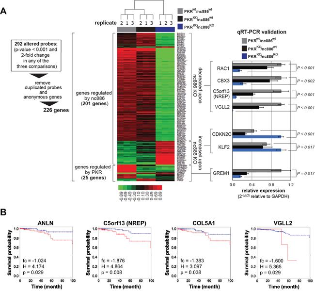 Comparison of gene expression profiles among PKRwt/nc886wt, PKRKO/nc886wt, and PKRKO/nc886KO cells.