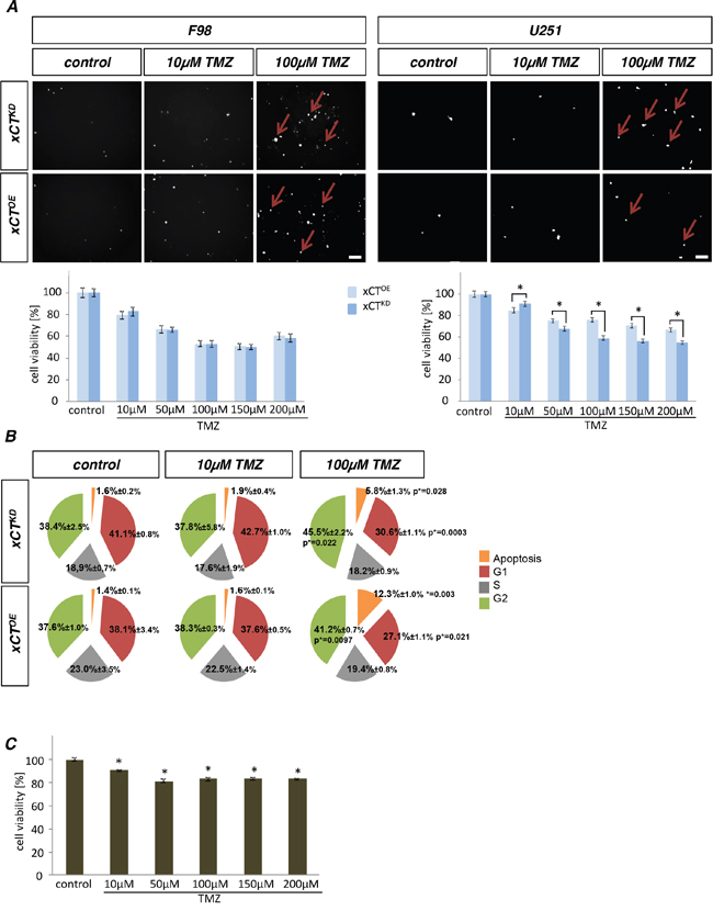 Temozolomide acts on human glioma cells in a xCT-dependent manner.
