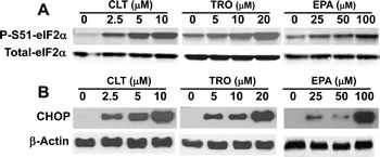 CLT, EPA, and TRO cause eIF2α phosphorylation and induce CHOP expression in KLN cells.
