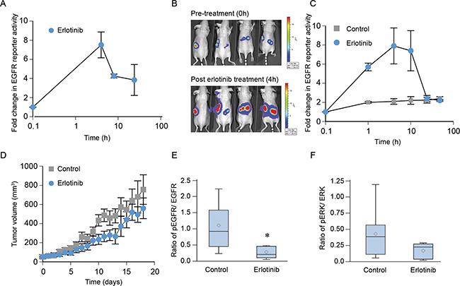 Erlotinib blocks EGFR phosphorylation in vivo in NCI-H1975 xenografts but not affect tumor growth.