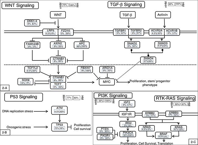 Highly mutated signaling pathways.