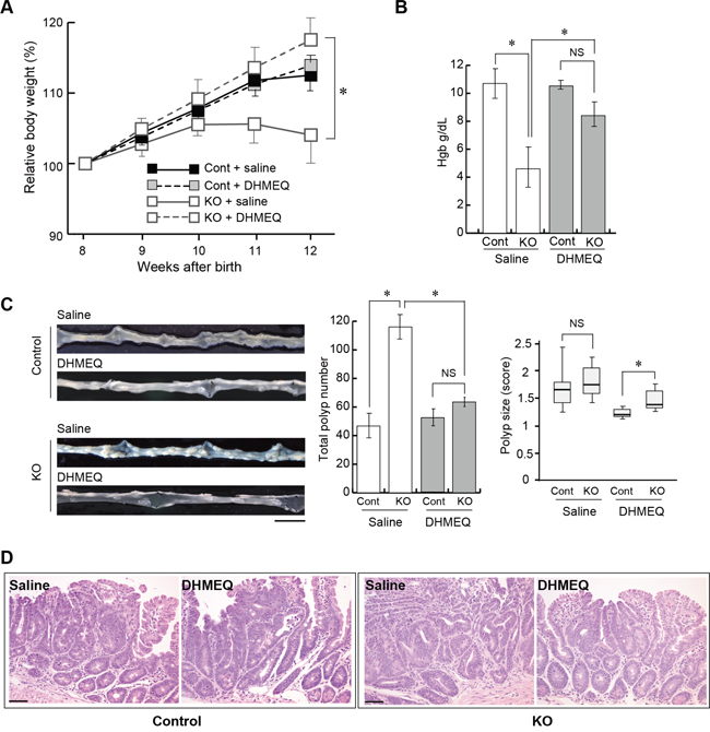 Effect of DHMEQ on intestinal tumorigenesis in HAI-1-deficient ApcMin/+ mice.