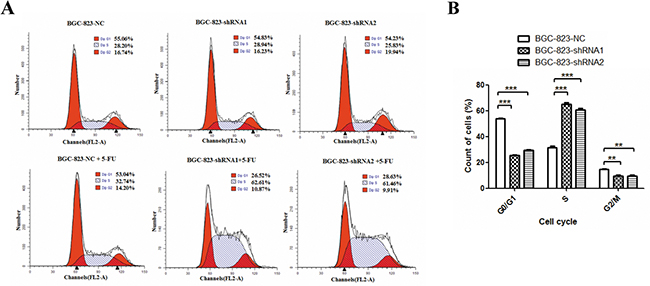 Effects of DCTPP1 knockdown on 5-FU-induced cell cycle arrest in BGC-823 cells.