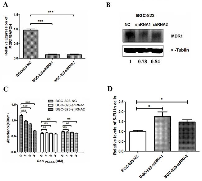 MDR1 expression in DCTPP1-knockdown BGC-823 cells.