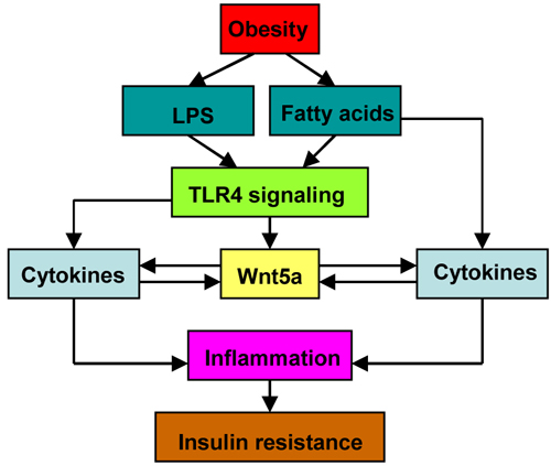 inflammation and insulin resistance pdf