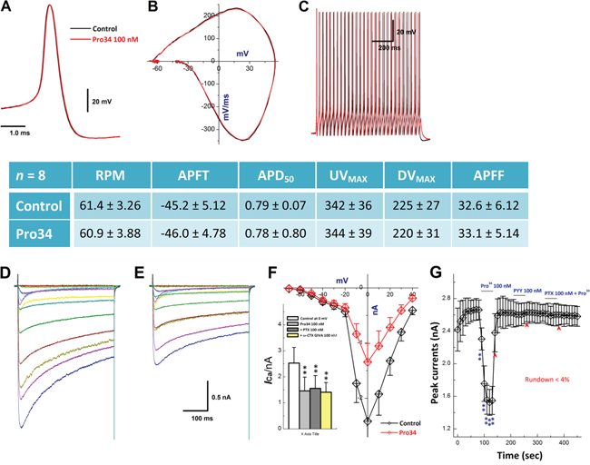 Effects of Pro34 on AP discharge profiles and ICa in identified A-type BRNs.