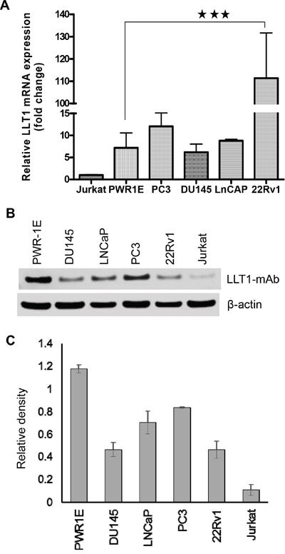 Human prostate cancer cells express LLT1.