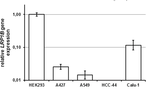 Endogenous LRP1B levels in non-small cell lung cancer cell lines.