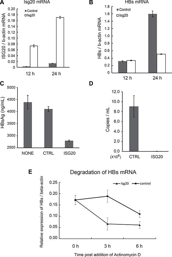 ISG20 down-regulates HBV RNA via posttranscriptional mechanism.