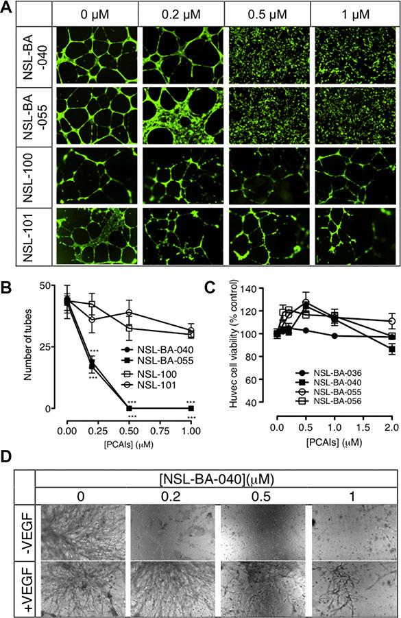 PCAIs inhibit HUVEC tube formation and in vitro angiogenesis but not HUVEC cell viability.