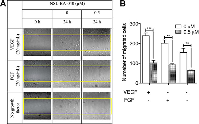 PCAIs inhibit HUVEC migration in vitro.