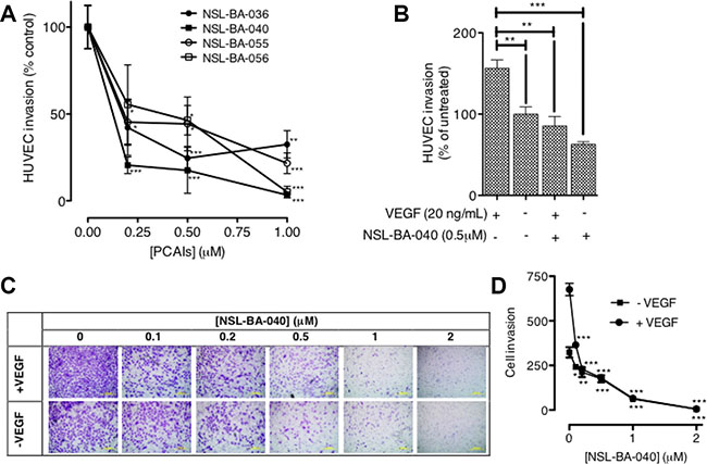PCAIs significantly inhibit HUVEC migration and invasion.
