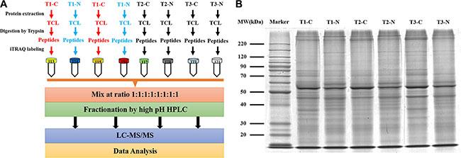 The workflow of quantitative proteomics study for a series of different stage HCC samples.