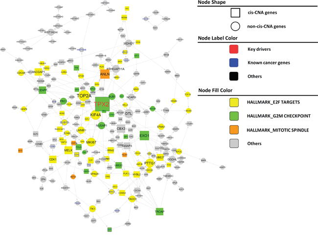 Subnetworks positively associated with BCR in PCa.
