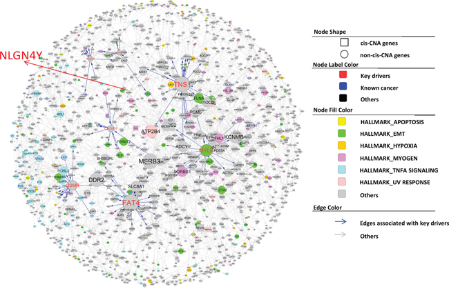Subnetworks negatively associated with BCR in PCa.