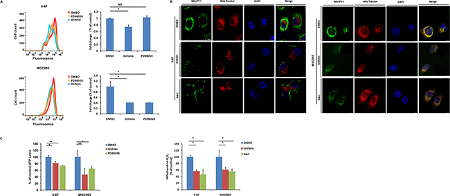 Grifolin attenuates intracellular ROS level and causes ATP depletion.