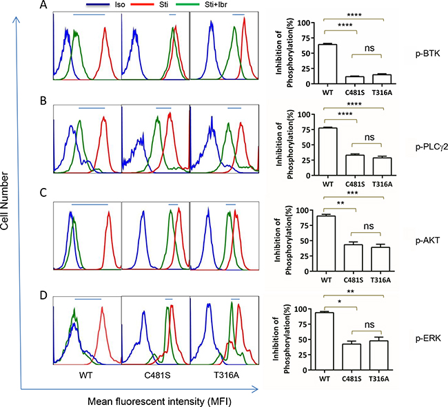 T316A mutation functionally confers ibr resistance at the molecular level.