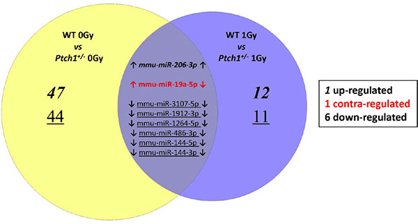 Venn Diagram describes the overlap between the statistically significant miRNAs perturbed in the unirradiated (left) and 1 Gy irradiated (right) Ptch1+/− GCPs when compared to the corresponding WT GCPs.