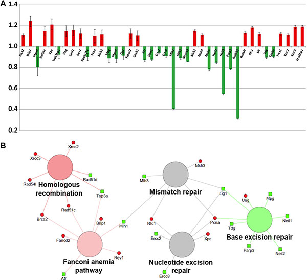 Analysis of statistically significant (P < 0.05) mRNAs involved in the DNA damage response in the Ptch1+/− GCPs after 1 Gy of X-rays with respect to the irradiated WT counterpart.