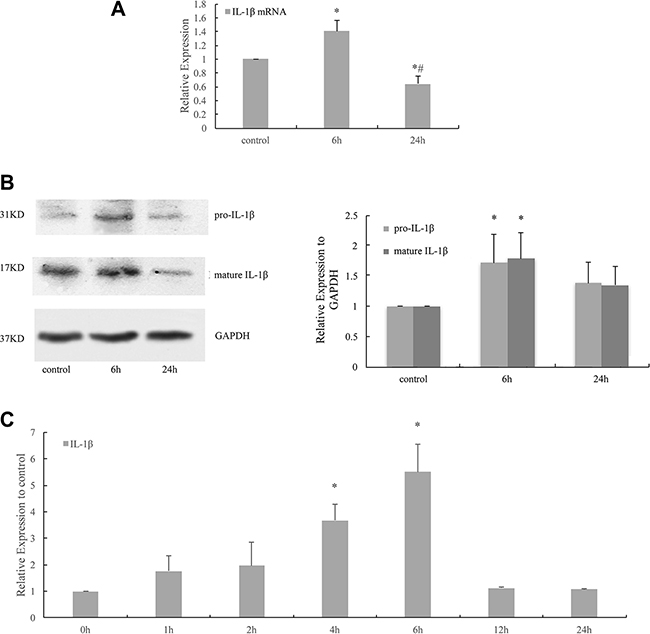 Cyclic stretch induced the activation and release of IL-1β in HPDLCs.