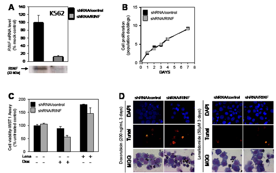 RINF knock-down sensitizes K562 cells to doxorubicin- and lenalidomid-induced apoptosis.