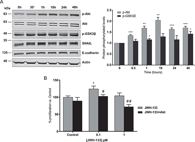 Signaling mechanisms activated by JWH-133 0.1 μM in HT29 cells.