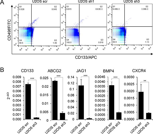 FOXC2 is required for the expression of molecular markers of tumor-propagating cells.