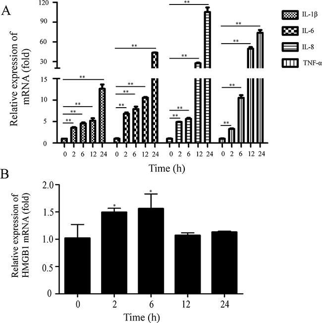 PEDV infection induces the increase of proinflammatory cytokines.