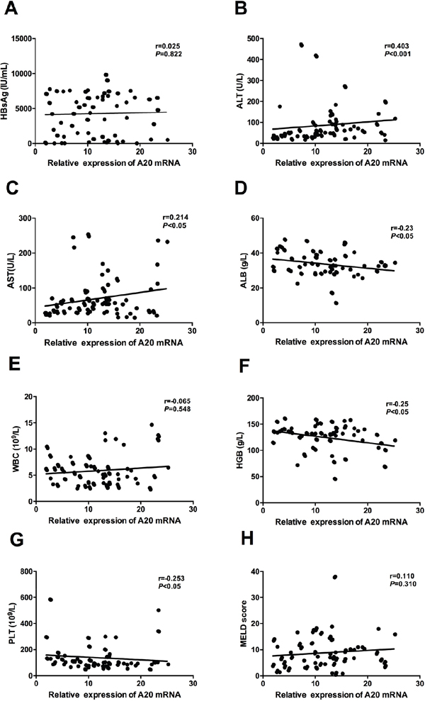 Correlation between relative expression of A20 mRNA and clinical parameters of patients with liver cirrhosis.