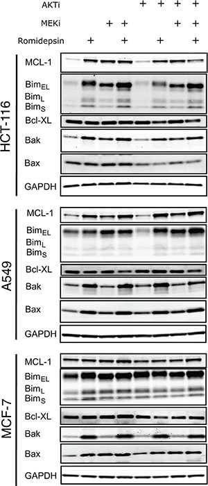 Short-term romidepsin treatment in combination with a MAPK and a PI3K inhibitor induces changes in expression of pro- and antiapoptotic proteins.