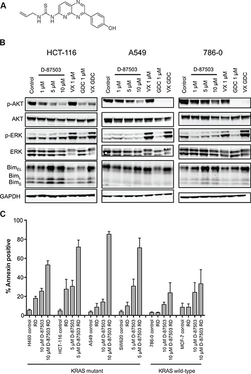 A dual inhibitor of the MAPK and PI3K pathways induces apoptosis in KRAS mutant cell lines when combined with romidepsin.