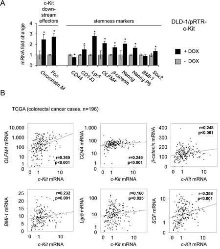 Ectopic c-Kit induces expression of stemness markers and correlates with their expression in primary CRC.