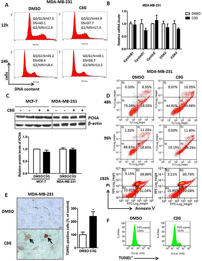 Cy-3-glu induces apoptosis in the MDA-MB-231 TNBC cells without affecting the cell-cycle.