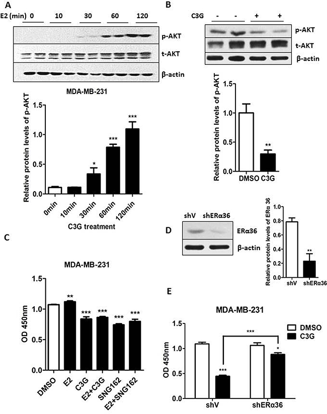 Cy-3-glu counteracts the estrogen-induced proliferation of MDA-MB-231 TNBC cells.