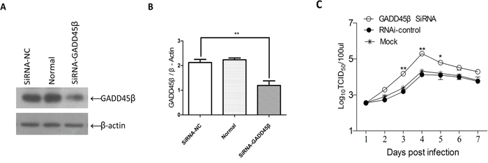 Effects of interference with expression GADD45β on ALV-J replication.