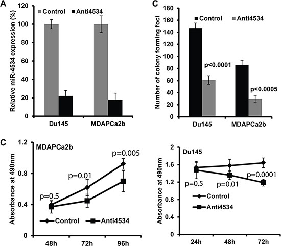 Effect of miR-4534 knockdown in prostate cancer cells.
