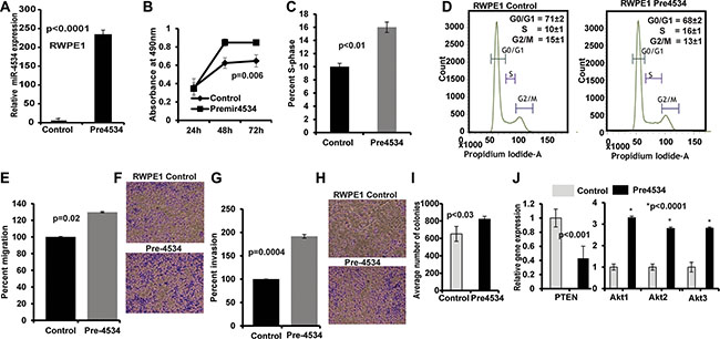 Overexpression of miR-4534 in normal prostate cells (RWPE1).