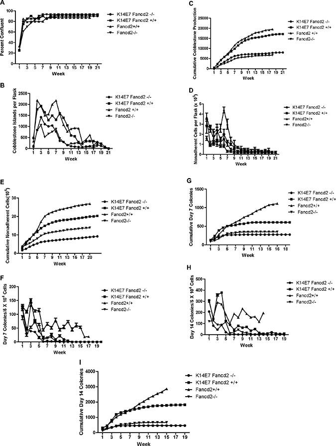 LTBMCs from K14E7Fancd2−/− mice show reduced longevity of hematopoiesis.