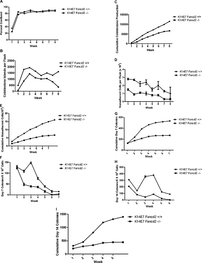 LTBMCs from oral-4NQO treated K14E7Fancd2−/− mice show reduced duration of hematopoiesis.