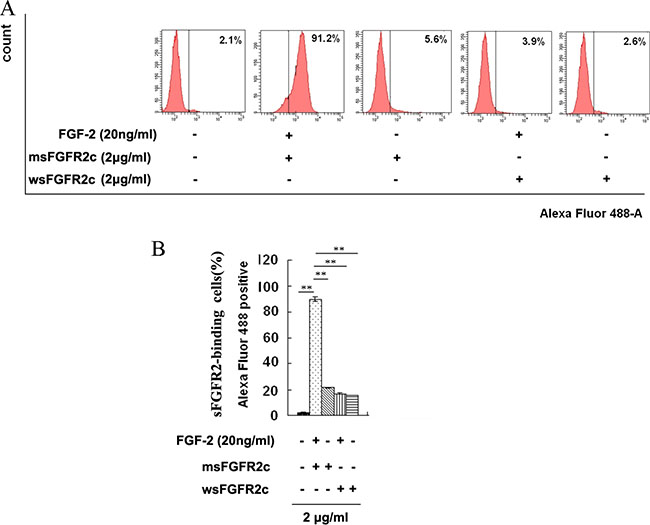 Identification of sFGFR2c binding to surface of FGFR2IIIc by flow cytometry.
